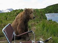 野生の熊に遭遇してしまった...でもなんかカワイイ!
