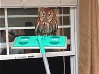 家の中にフクロウが入ってきたから追い出してやったぜ!