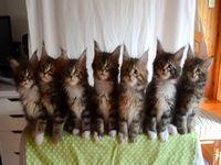 脅威のシンクロ率で首を振る7匹の子猫