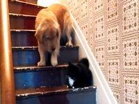 犬「猫が怖くて階段を降りれないッス...」