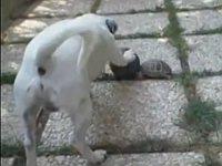 亀と犬が一緒にボール遊びしてる!?