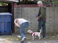 飼い主が拾うよりも先に犬のブツを回収するウ○コ泥棒