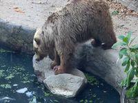 池で溺れるカラスを目撃した熊がとった行動とは...