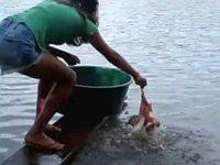淡々とピラニアを釣り上げる女の子が凄い