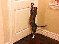 自分でドアを開けて出入りする器用な猫ちゃんたち