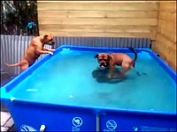 プールに沈んだタイヤを協力してGETする賢い犬たち
