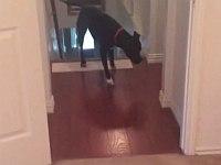 何故か部屋の出入口を怖がる犬が部屋に入るため編み出した技が可愛い