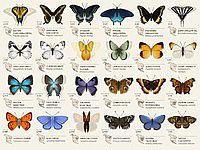 見ているだけでも楽しい 動く蝶々図鑑