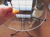 ガラスのテーブルの向こう側から必死に猫パンチする猫たち