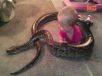 巨大なニシキヘビが赤ちゃんを子守してる・・!