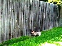 犬たちは見た!?壁の隙間から向こう側を覗き見る犬たち