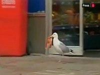 賢い!?鳥達の恐るべき盗みのテクニックを捉えたコンピレーション動画
