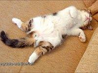 ある意味野性的?おかしなポーズで寝ている猫たち