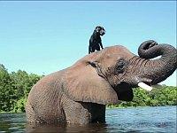 愛に種族は関係ない!仲良しな異種動物たちの総集編動画