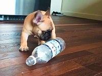 ペットボトルとじゃれ合う犬たち