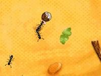 トリビア発見!暇つぶし無料アリ育成雑学ゲーム ぼくとアリビア 蟻の観察ゲーム
