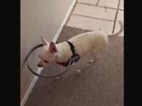 目の不自由なペットの為に飼い主さんが補助具を発明