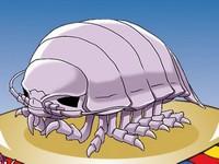 超ダイオウグソクムシコレクション(グソコレ) 新種のダイオウグソクムシを集めるゲーム