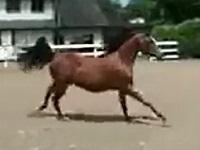 意外な方法で柵から脱走する馬