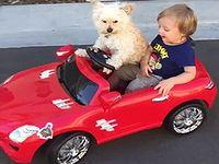助手席に男の子を乗せてオモチャのクルマを走らせる犬の運転手さん