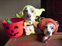 ハロウィンで様々な衣装を着せられる犬たち