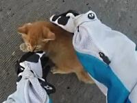 道路で怯える子猫を助ける女性バイカー
