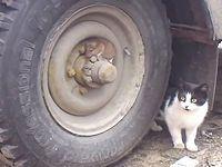 ネコから逃げるよりも隠れることを選択したネズミくん