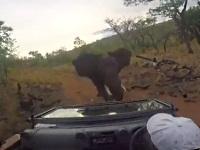 象に追いかけられるジープ