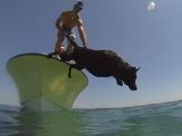 海に潜ってロブスターをとってくるワンちゃん