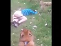 犬の散歩中に倒れてる女性を見つけ、そのままアナルSEX