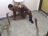 2匹のコブラとキスしたくてたまらない男が危険すぎるwww