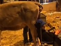 寝ていると頭に牛のクソをひり出されるイタズラ