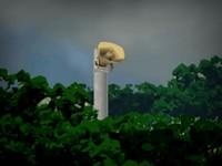 実験島 謎の島で生き残るサバイバルゲーム