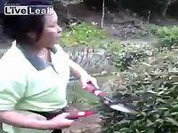 庭師のおばさんが鳥の巣をみつけた直後にとったショッキングな行動とは...