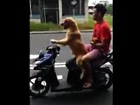 バイクを運転する犬