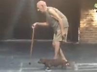 飼い主さんの速度に合わせてお散歩する優しい犬