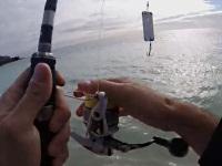 携帯電話(iPhone)を使って魚が釣れるかやってみた