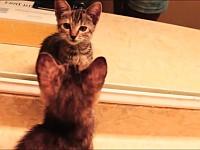 【総集編】鏡の中の自分を見て思いっきり警戒しちゃう猫たち