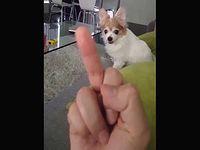 中指を立てるとブチ切れて襲ってくるイッヌが可愛いwww