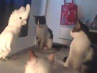 ネコの鳴き真似が得意なオウムがネコの集会に突撃した結果www