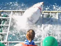 観察用の檻をやぶってサメが入ってくるハプニング