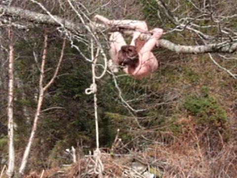木に吊るしたロープでプレイしていた全裸お姉さんに起きたトラブル