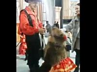 死角から顔を触られて女性を転倒させるタレント熊ちゃん