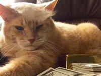 猫飼いならやってみたい!抜け毛で作るトランプヘアーなモフかつら