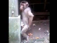 柱にチ●コをあててオナニーを楽しむお猿さん
