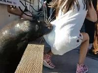 カワイイ顔して意外と怖い!?女の子を海に引っ張って落とすアシカ
