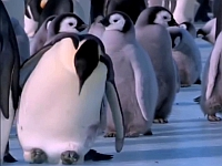 ペンギンたちが転けるシーンを集めた動画が可愛い