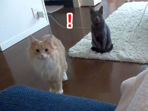 果たして「猫語翻訳機」で飼い猫とのコミュニケーションは図れるのか?!