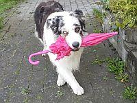 【戌年】今年は縁起がいいワンね!スキップする賢い犬をご覧ください