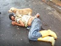 路上で寝ている飼い主のそばについて守るワンちゃんが頼もしい